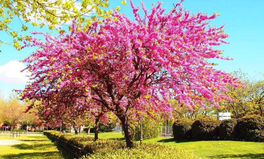 Producción Forestal 1 - Fundamentos de árboles y flores