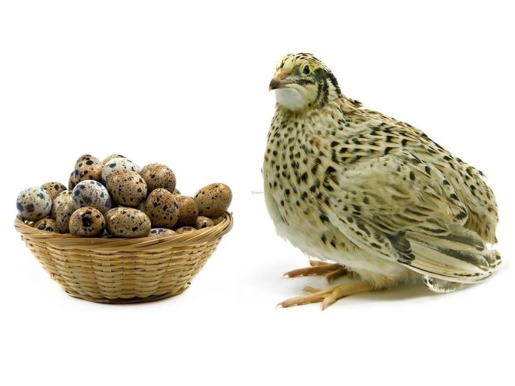 Producción Pecuaria 1 - Aves de -Corral